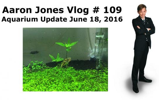 Aquarium Update June 18, 2016 : Aaron Jones Vlog # 109